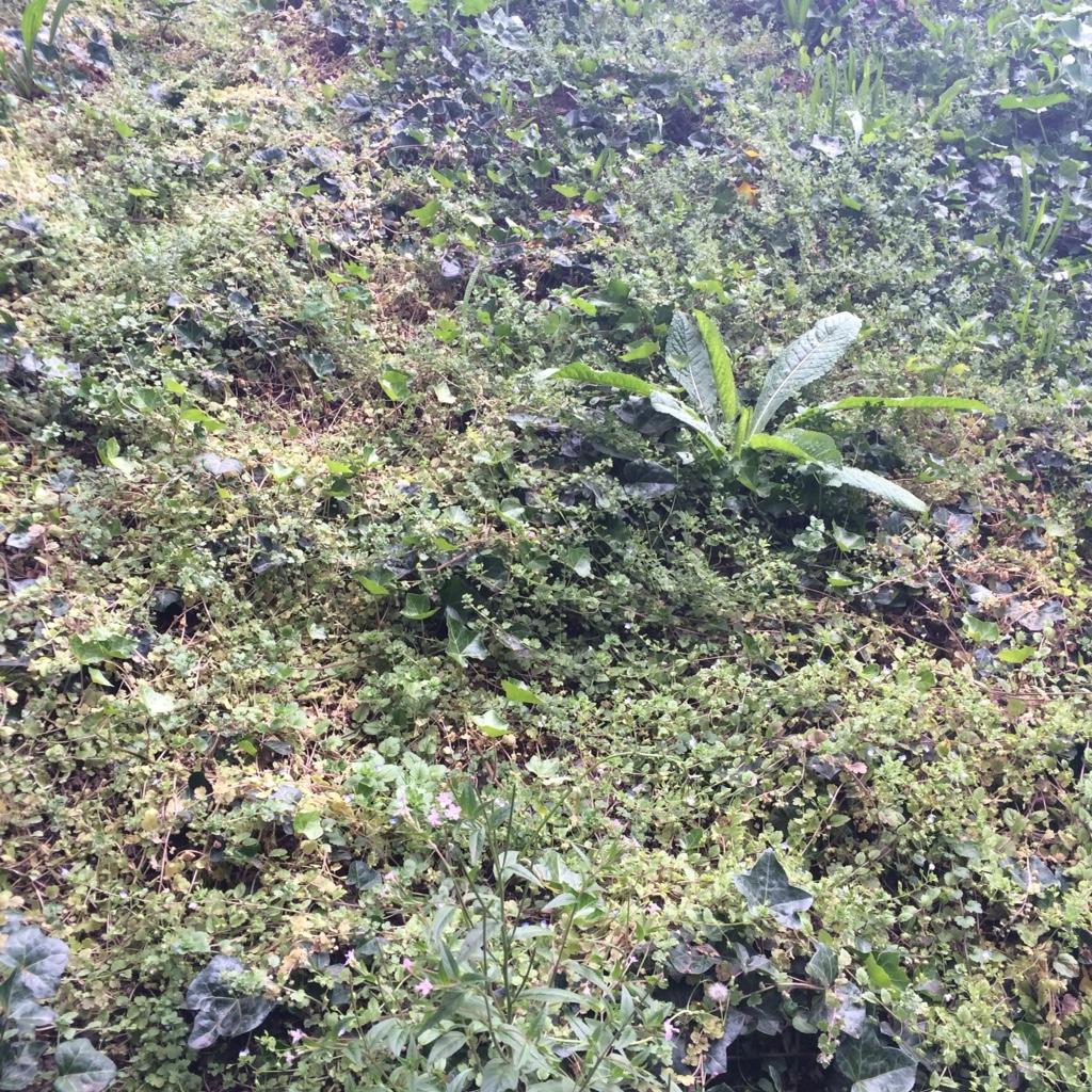 Green plants midorigreen.co.uk