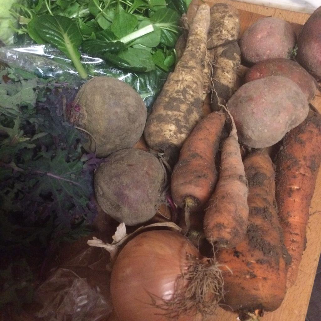 Veg bag contents of beetroot, salad leaves, kale, onions, carrots, parsnips and potatoes midorigreen.co.uk