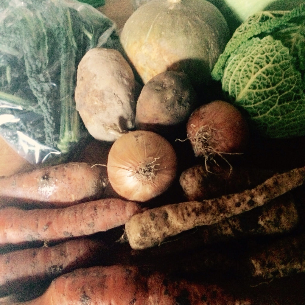 Veg bag contents Calvo Nero, carrots, parsnip, squash, onions, potatoes, Savoy cabbage midorigreen.co.uk