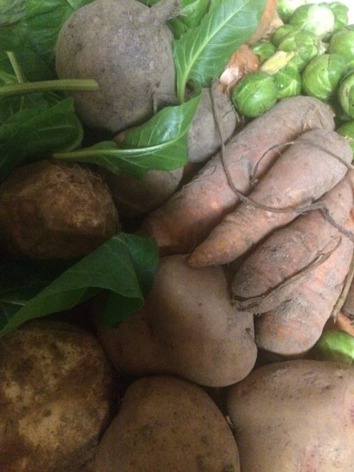 Veg box content 5 February 2017 spinach Brussels sprouts potatoes celeriac carrots - midorigreen.co.uk