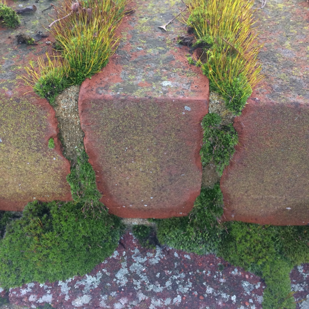 Green mosses are taking over a wall