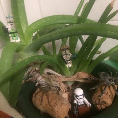 Star Wars Lego figures hang out in the Aloe Vera plant midorigreen.couk