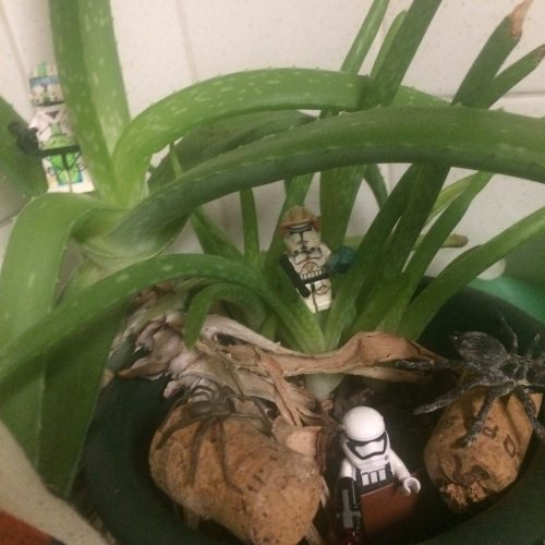 Star Lego figures hang out in the Aloe Vera plant midorigreen.co.uk