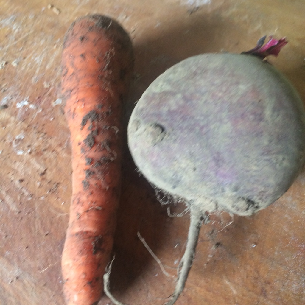 Huge carrot and beetroot - veg bag - midorigreen.co.uk