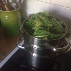 Steaming turnip greens | midorigreen.co.uk